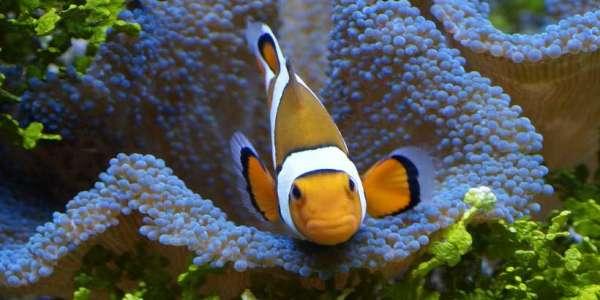 Tropic Marin: Pro-Reef vs Meersalz