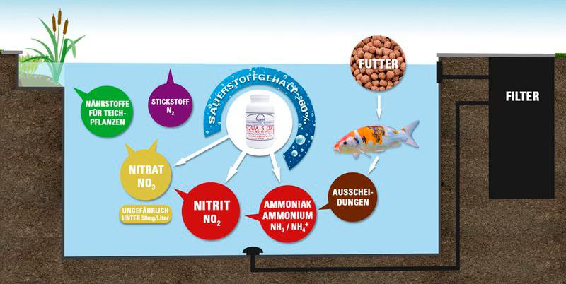 Infografik Nitrifikations-Prozess mit Aqua5Dry Teichbakterien