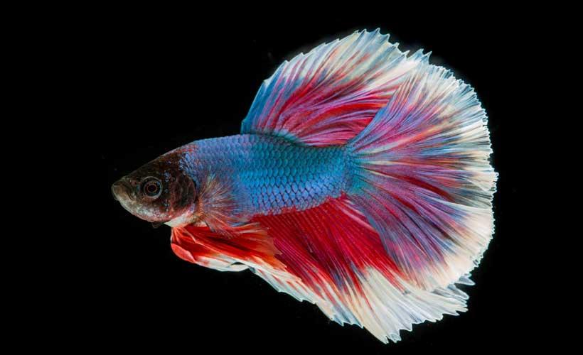 Aquarium Fische für kleine Nano-Becken