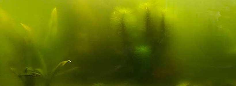 Trübes Wasser im Aquarium