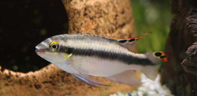Aquariumkombination für Einsteiger und Profis