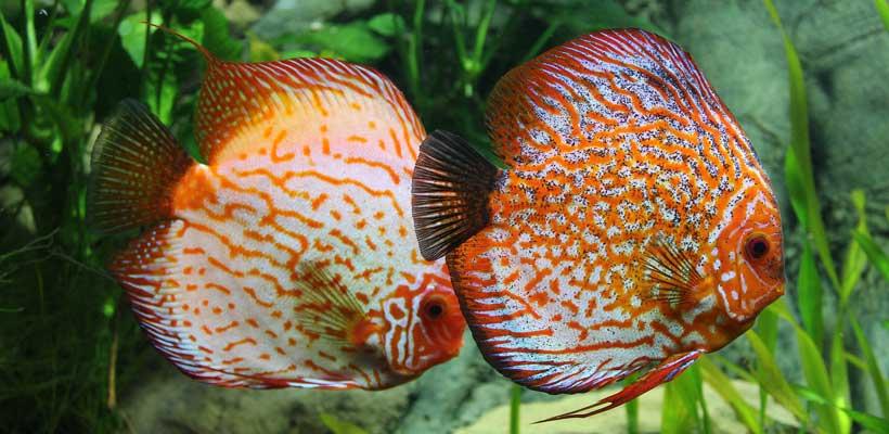 So können Sie ein Aquarium selber bauen