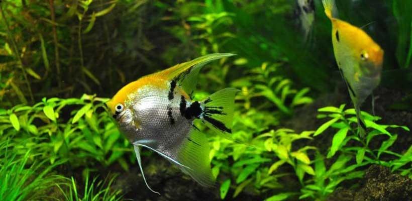 Aquarium: Was brauche ich alles?